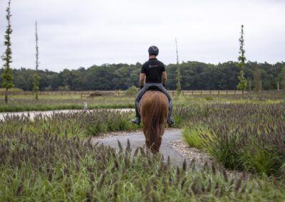 Begijnhoeve te Poste paard in tuin